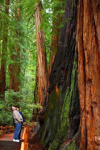 IMG_9029 Tourists and Coastal Redwood, Muir Woods National Monument