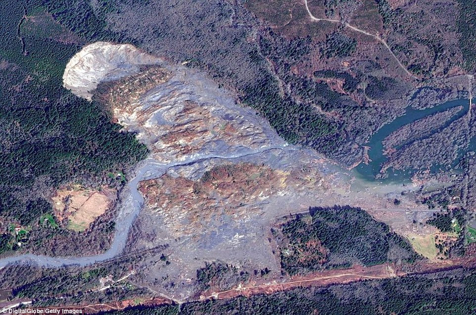 Destruction:The scale of the devastating Oso mudslide can be seen from this satellite image taken in March.The pool of sludge measuring about 300 acres, which wiped out the mountainside communit, stands out against the greenery of the surviving trees