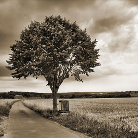 Tree by Estetic of Senses (danendid) on 500px.com