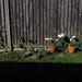 garden shadow