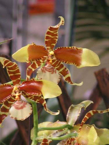orchids14