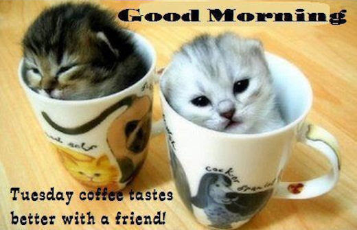 Good Morning Tuesday Coffee Tastes Better With A Friend Pictures