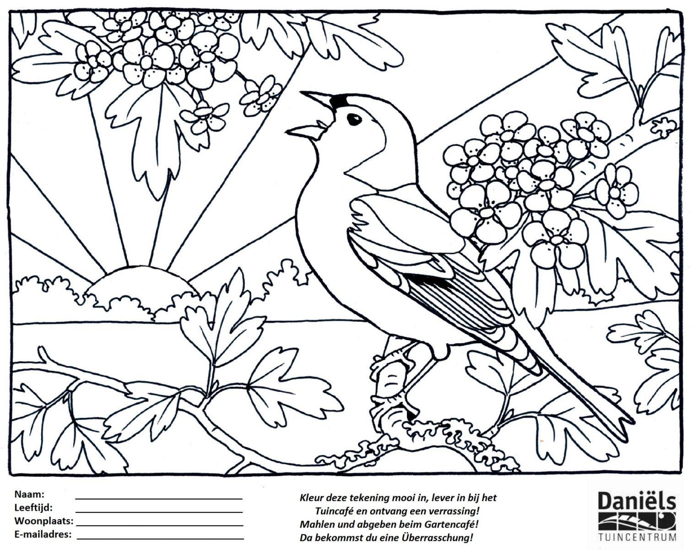 nieuw kleurplaten vogels en bloemen krijg duizenden