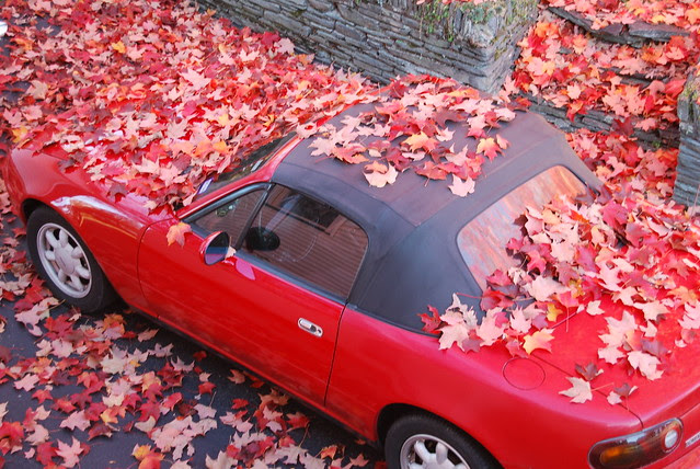 Red car red leaves