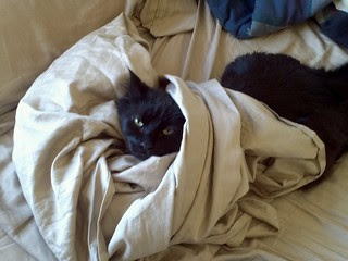 jobu putting holes in my new sheets