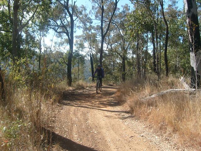 Fire Trail - Banks Creek