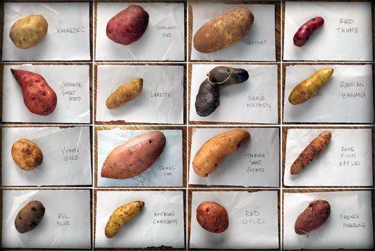photo potatoes_zps050eec88.jpg