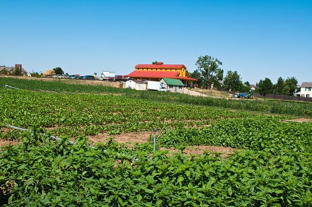 Isabelle Farm, the Big Barn