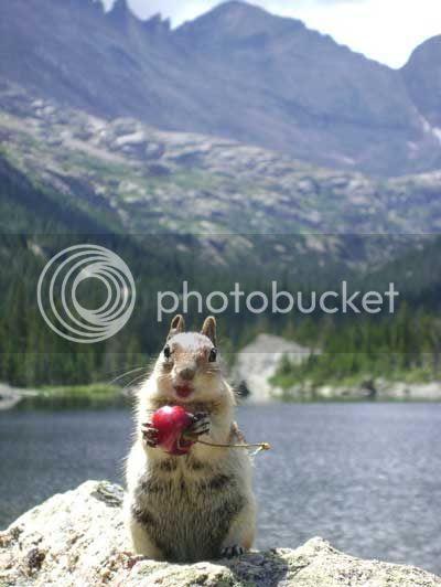 Caryn Walters' photo of a squirrel