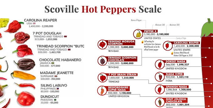 Infographic : Scoville Hot Pepper Scale