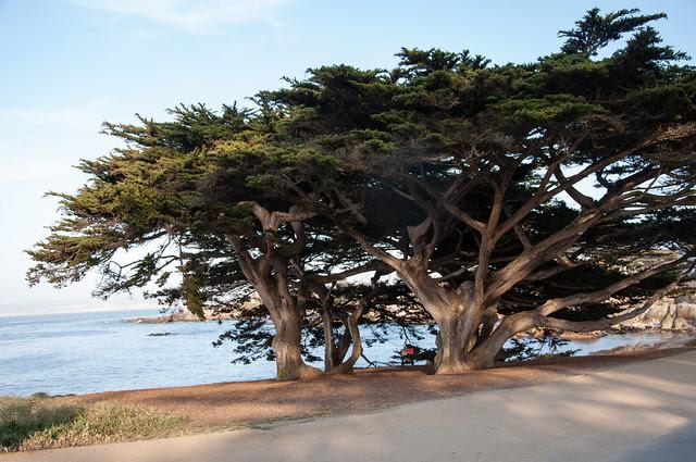california 2013-41