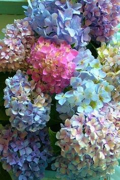 Gramma and Grampa's garden always had beautiful hydrangeas.