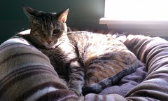 Cat bed and ray of sunshine...