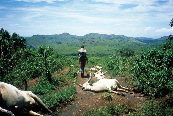 animales muertos co2 en camerun