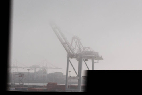 Oakland horse vanishing into the fog