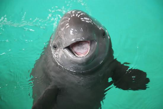 Image result for porpoise