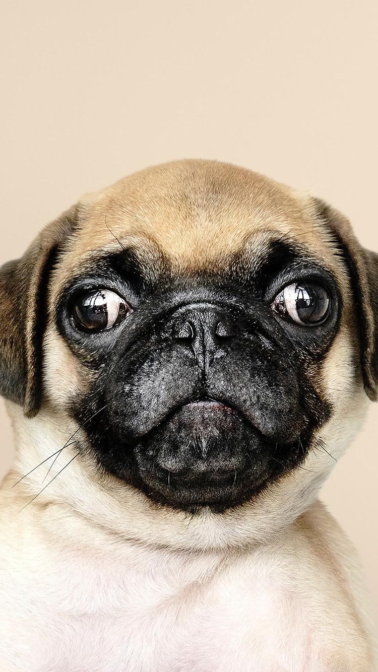 Unduh 400 Wallpaper Apple Dog HD Gratis