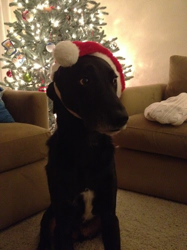 Santa dog.