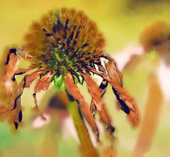 cone flower water color