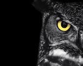 "Great Horned Owl Photo - ""Ladybird"" - 5x7 Black and White Bird Photography Print - Minimal Animal Art - Black Background - Gift under 10 - StephsShoes"