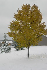 Thanksgiving Day Snow