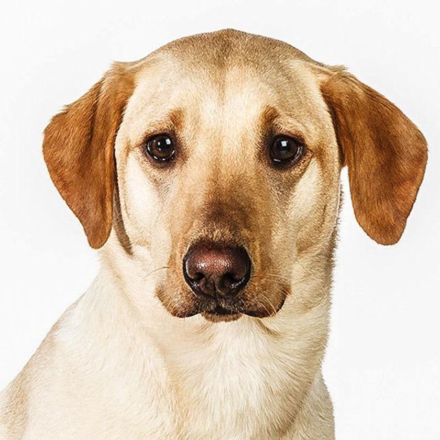 Retratos de cães cheios de personalidade 17