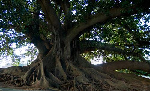 Tree Near Recoleta Cemetery