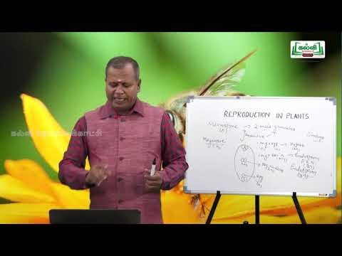 NEET Botany Reproduction In Plants Pollination Kalvi TV