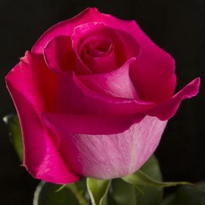Ramo De Rosas Floristería El Vergel