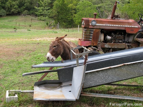 Donkey Doodle Dandy scratches an itch (1) - FarmgirlFare.com