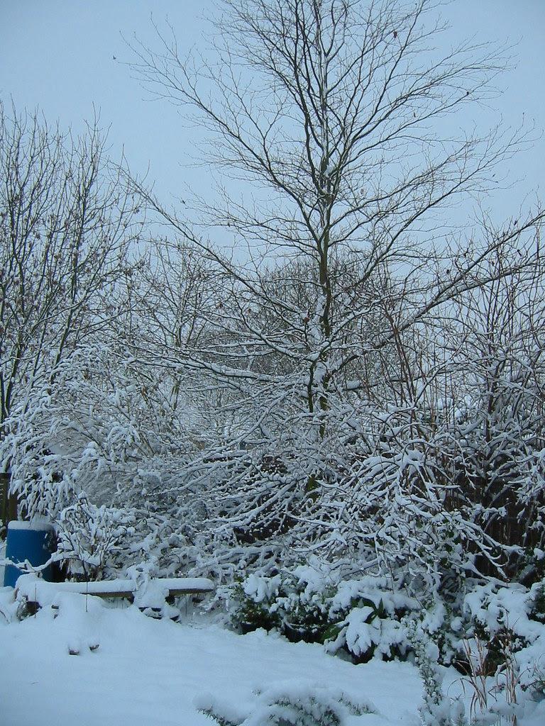more bl***y snow