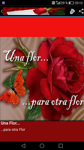 Imagenes De Flores De Amor Imagenes