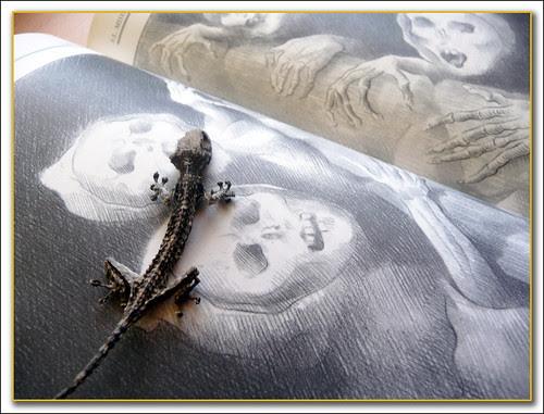entre muertos: el miserere