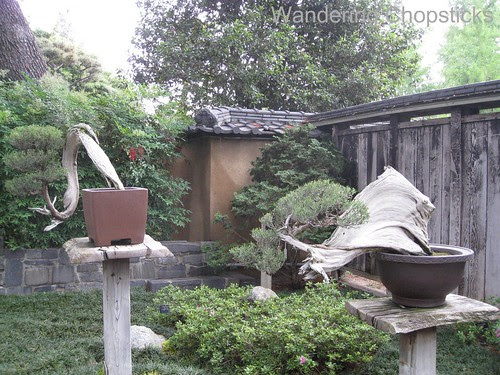 The Huntington Library, Art Collections, and Botanical Gardens (Japanese Garden) (Spring) - San Marino 14