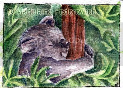 Sleepy Koala ACEO
