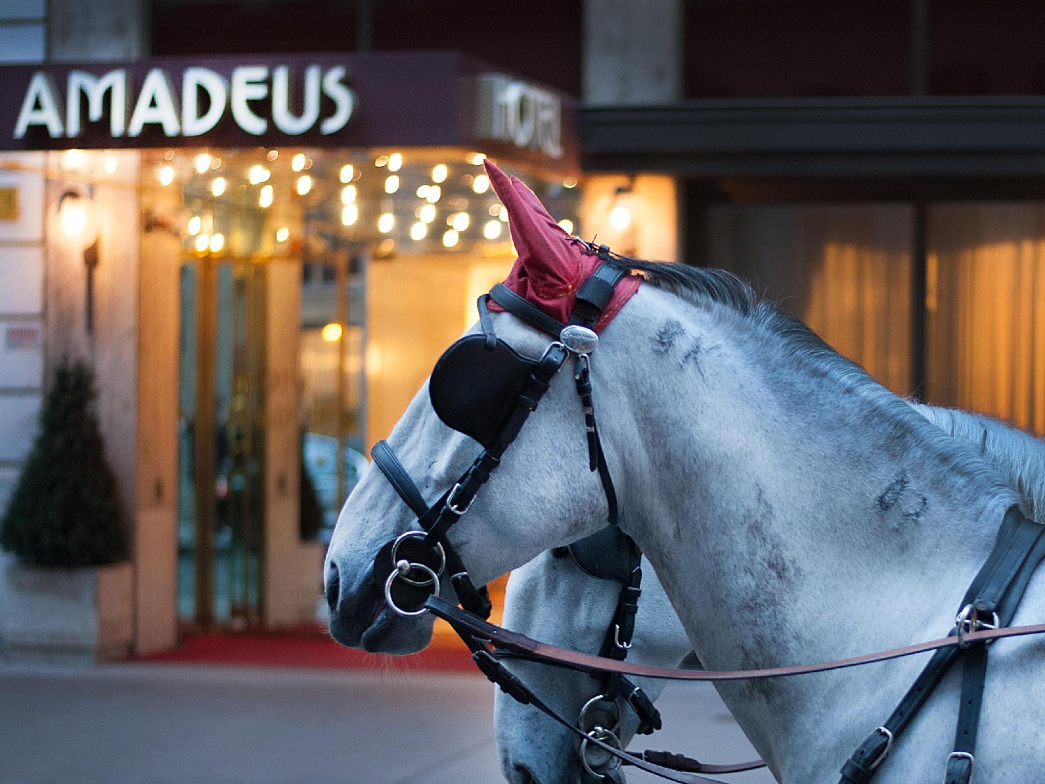 Hotel Amadeus Reviews