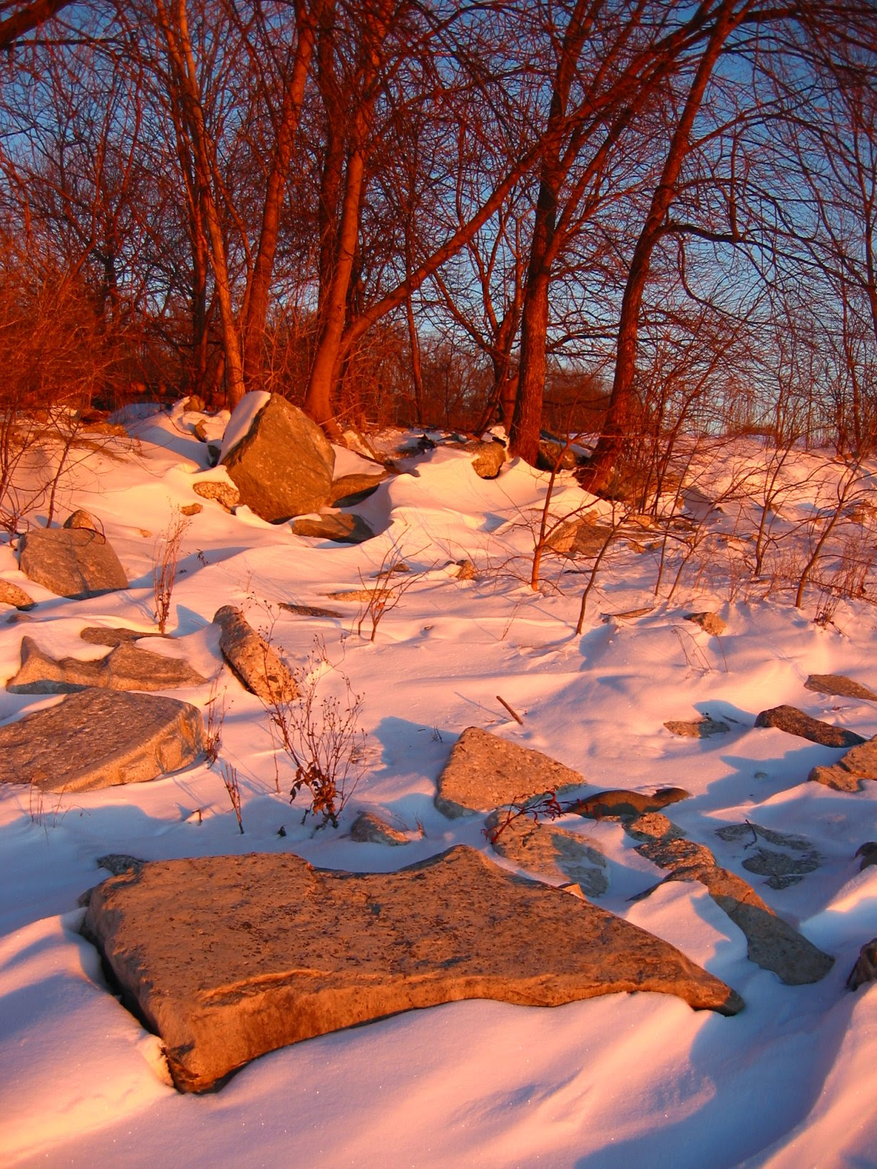 Rocks and Trees during cold Lake Michigan Sunrise - 12-06-2007 - soul-amp.com