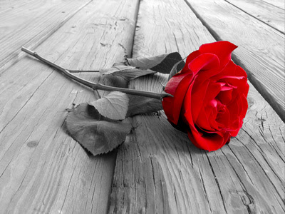 50 Sfondo Nero Con Rosa Rossa Tumblr Sfondo