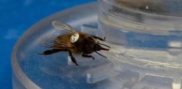 A equipe de pesquisadores usou néctar com cafeína para testar seus efeitos nas abelhas