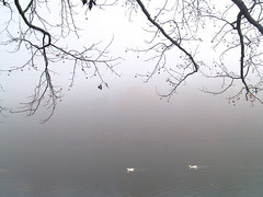Lakewood fog