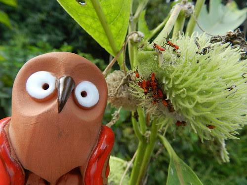 Palito and milkweed bugs