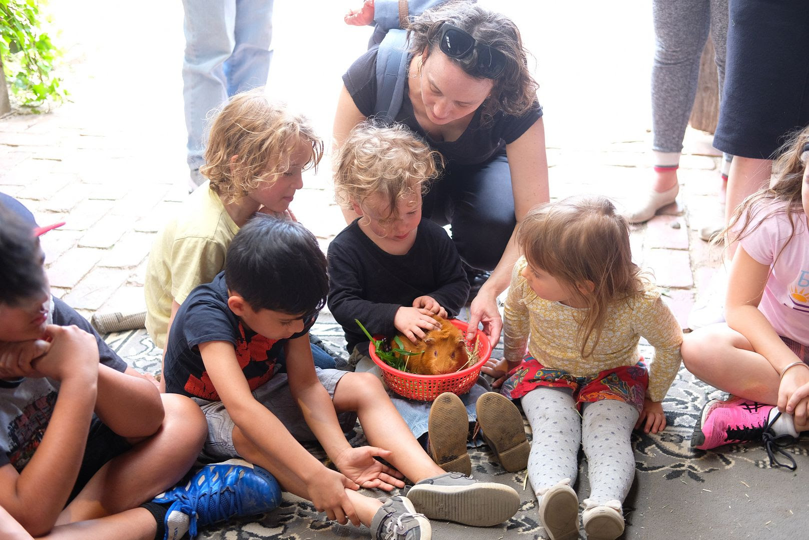 photo Collingwood Childrens Farm 7.jpg