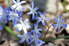 spring flowers 090