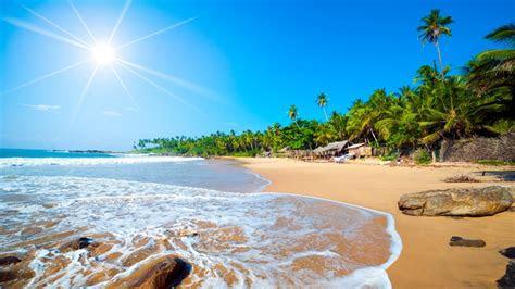 exotic sri lanka jaffna beach tropical forest palm trees