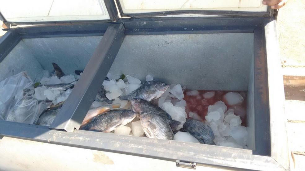 Peixes eram revendidos pelo homem em um bairro de Bocaiuva (Foto: Polícia Militar/Divulgação)