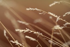 reaching-grasses