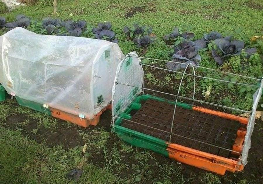Como hacer un vivero casero informaciones agronomicas for Como establecer un vivero