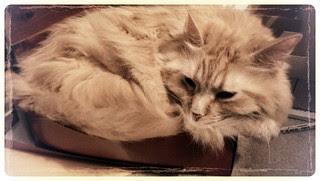 Jasper fits in the box, right?