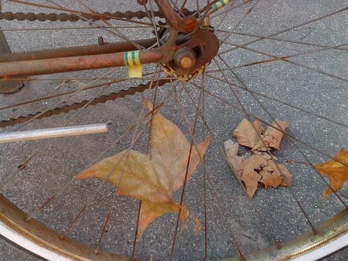Un foglio secco nella ruota della bici by Ylbert Durishti