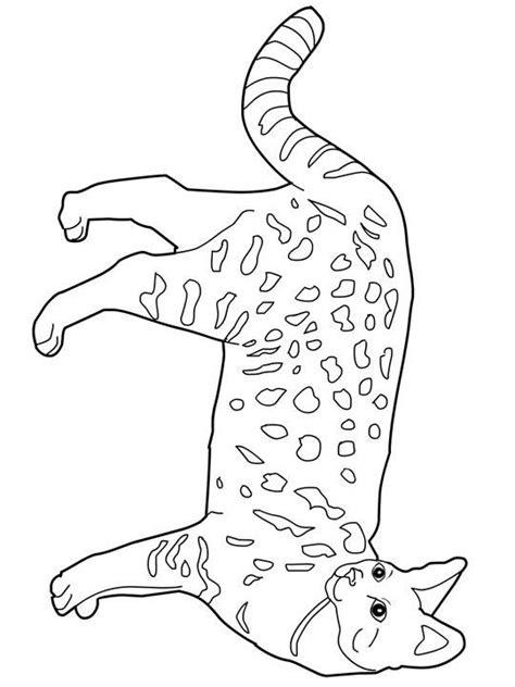 savannah cat clipart  savannah cat clipart
